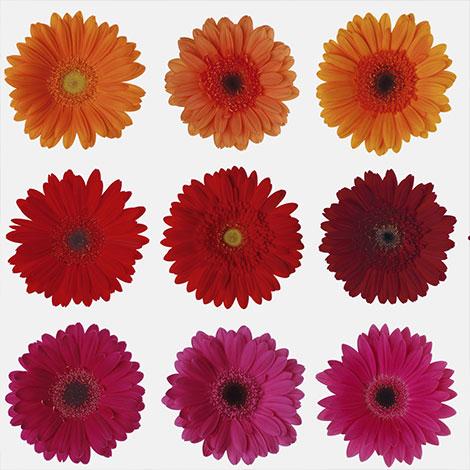 Santa Rosa Plaza- Promo - Floral Boquet Event - Copy image