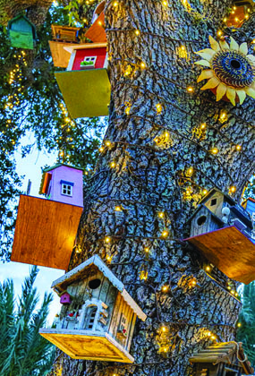 boca - service - birdhouses image