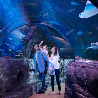 Arizona Mills - Spot 4 - Sealife - Copy image