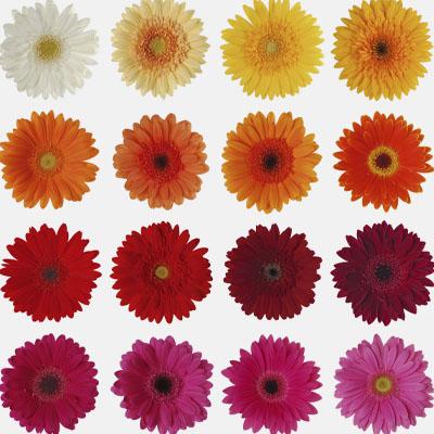 Penn Square Mall - Spot 4 - Flower Teacher APpreciation image
