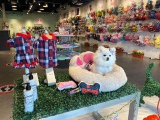 NOW OPEN: Diva Dogs Boutique