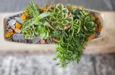 banter & bliss Succulent Workshop!